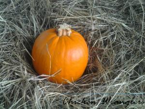 CWPumpkin